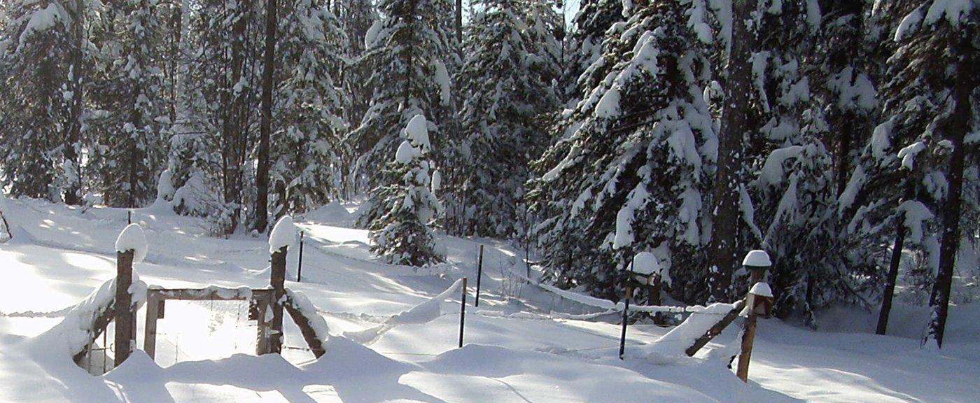 Post Winter Solstice Moods (Latitude 62)